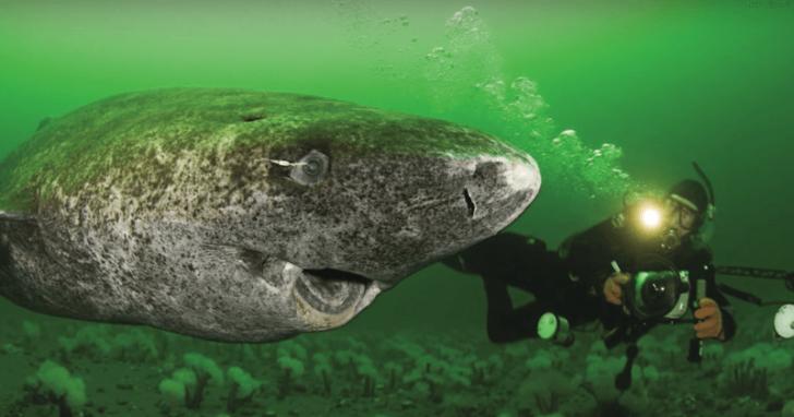 Monstrul marin din Atlantic. Descoperire uluitoare: are 512 ani. Cea mai bătrână vertebrată din lume
