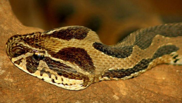 Muşcat de şarpele veninos, şi-a înfipt dinţii în mâna soţiei, pentru a muri împreună. Şoc ce a urmat
