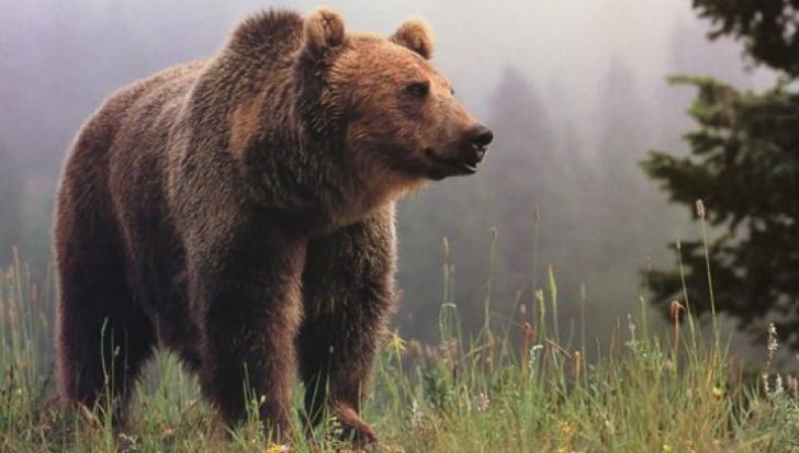 A salvat un pui de urs rămas orfan. Apoi, după 6 ani, animalul i-a făcut ceva teribil!