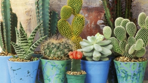 Ce se întâmplă dacă dormi cu un cactus în cameră. Nici măcar nu îţi imaginezi!
