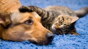Sterilizare gratuită pentru câinii şi pisicile fără pedigree din Capitală