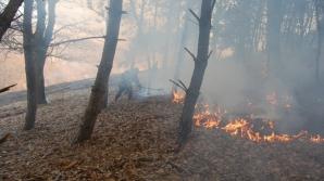 Incendiu în pădurea din apropierea cetății dacice Sarmizegetusa Regia