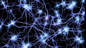 Cum ne putem multiplica numărul de neuroni. Este extrem de simplu