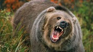 Bărbat atacat de urs