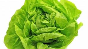 Salata verde, interzisă din cauza unei bacterii?!