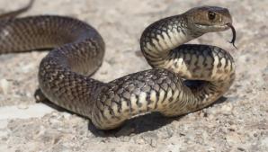 De ce nu e bine să omori șarpele casei
