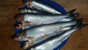 Peştele miraculos care îţi curăţă sângele de colesterol