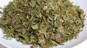 Iarba ţapului, planta care este mai tare decât Viagra. Ce efecte are