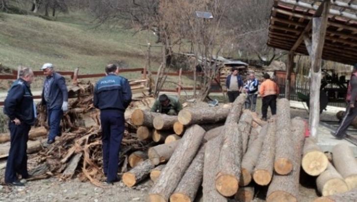 Mafia lemnului s-a modernizat, metoda uluitoare prin care se fură lemne cu acte