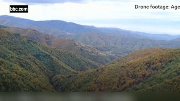 Semnal de alarmă tras de BBC! Pădurile din România, defrişate excesiv! E dezastru