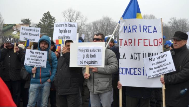 Medicii veterinari protestează la ușa lui Dăncilă. Pesta porcină s-a extins în 17 județe