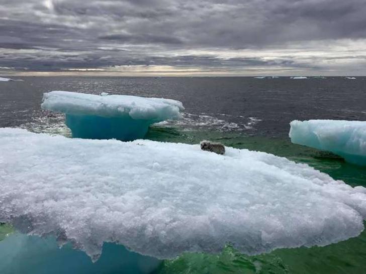 A zărit ceva ciudat pe un aisberg din Atlantic. Când s-a apropiat de gheţar, a încremenit!