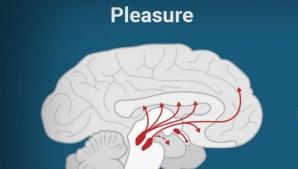 Ce produce la fel de multă plăcere ca un act sexual. E la îndemâna oricui