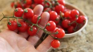 Adevărul despre roşiile cherry. Ce sunt de fapt. Mai cumperi?
