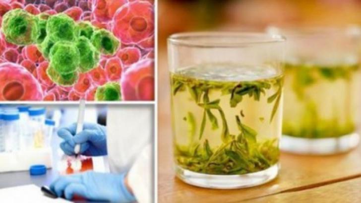 Singurul ceai care distruge celulele canceroase în 48 de ore. Iată cum se prepară