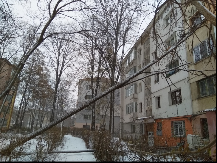 Copac prăbuşit peste un bloc din Iași