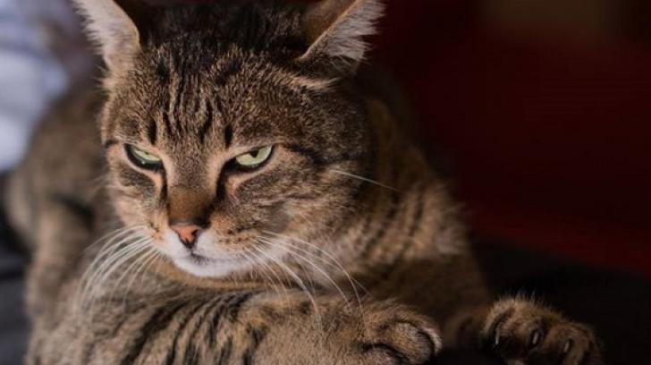 La ce sunt bune pisicile? În niciun caz la prins șoareci. Ce spun cercetătorii