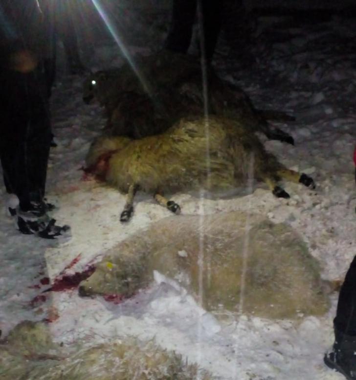 Un acoperiş s-a prăbuşit sub greutatea zăpezii peste 100 de oi