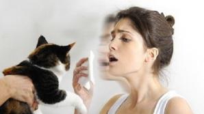 Alergia la părul de animale