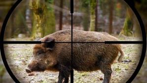 Satu Mare: Pădurar ucis de un porc mistreţ