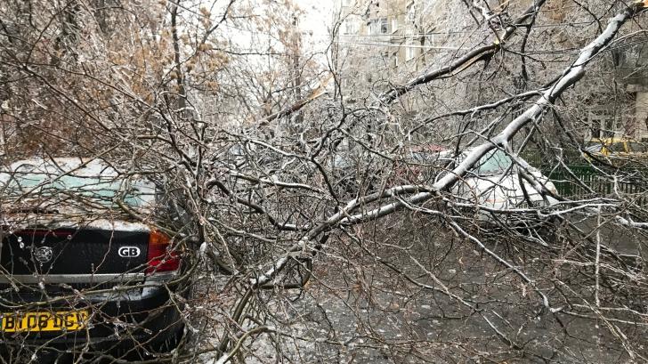 Bărbat rănit, după ce un copac a căzut peste el, în zona Crângași din București