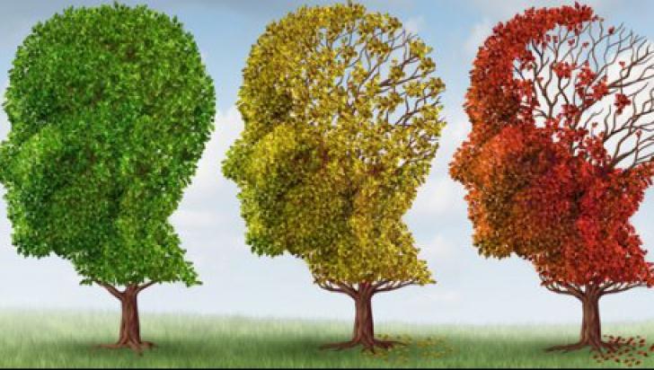 Descoperire absolut fabuloasă! Ce poate combate demența