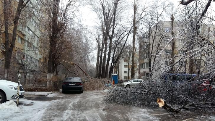 masina distrusa de copac cazut