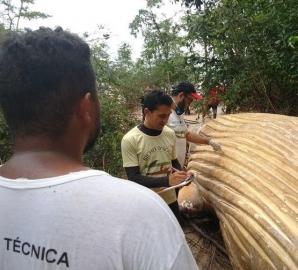 <p>Descoperire terifiantă în jungla amazoniană. Carcasa unei balene moarte, mister total!</p>