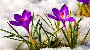 Cât mai durează vremea de primăvară. Meteorologii anunță schimbări dramatice. Prognoza pe o lună