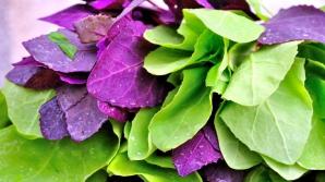 Loboda are de două ori mai multă vitamina C decât lămâia şi spanacul