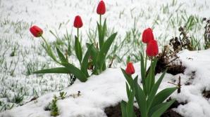 Prognoza ANM, revizuită! Se anunță schimbări meteo DRAMATICE, în următoarea lună. Vremea de 1 martie