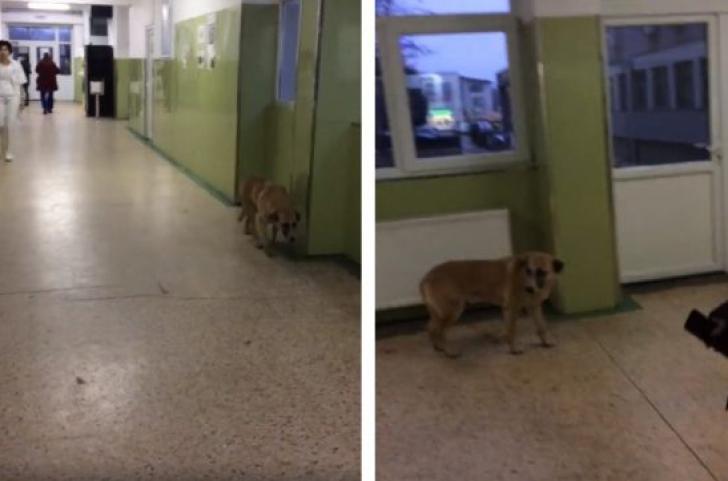 Spitalul Județean Târgoviște a confirmat imaginile cu câinele care se plimbă pe holuri