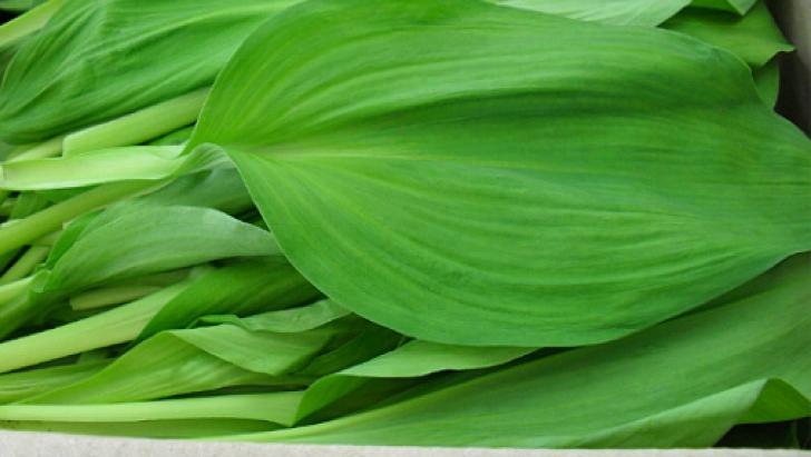 Leurda - planta miracol a primăverii. Vindecă sute de boli