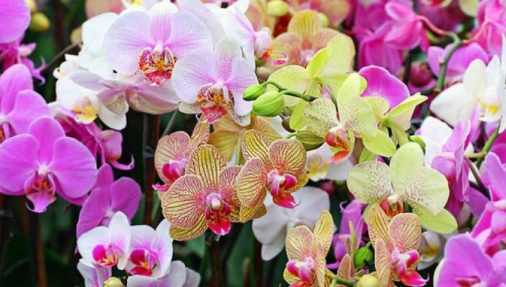 Un horticultor dezvăluie secretul orhideelor. Ce trebuie să faci ca să înflorească tot anul