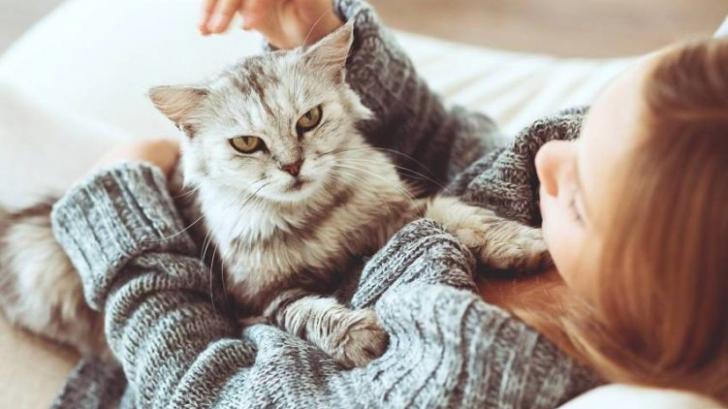 Stăpânii de pisici transmit trăsăturile de personalitate animalelor de companie