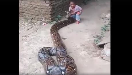 Copilul prinde capul șarpelui uriaș. Ce se întâmplă mai apoi pare ireal - VIDEO
