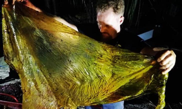 Peste 40 de kilograme de pungi de plastic, în stomacul unei balene