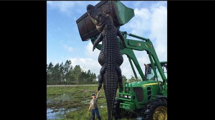 Au prins cu greu aligatorul-monstru. Apoi, i-au despicat stomacul și s-au îngrozit