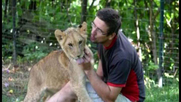 CUMPLIT! Un bărbat a fost mâncat de viu de un leu, pe care îl creştea acasă. VIDEO