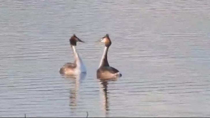 Imagini rare pe lacul Bacău! Dans spectaculos pe apă