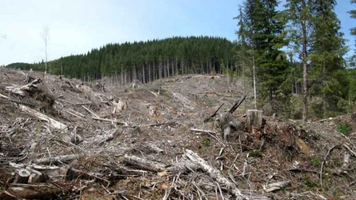 """""""Scutul pădurii"""" - paradisul defrișărilor ilegale !"""