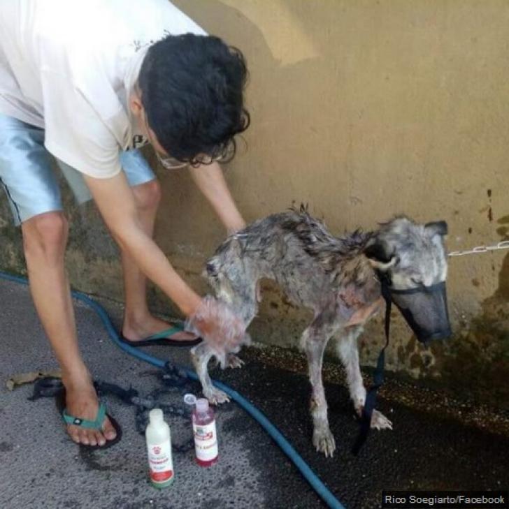 <p>A găsit animalul aproape mort, pe stradă. Când i-a văzut ochii, l-a şi luat acasă. Ce era creatura</p>