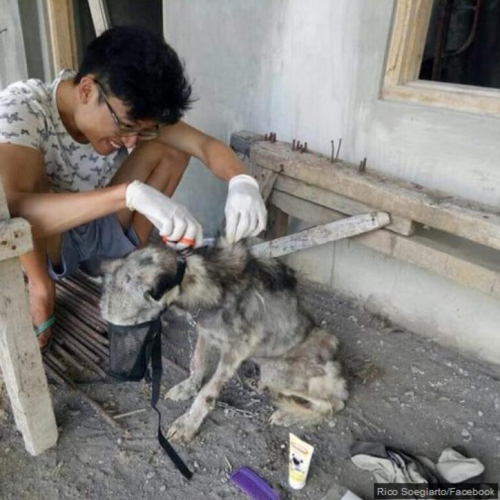 A găsit animalul aproape mort, pe stradă. Când i-a văzut ochii, l-a şi luat acasă. Ce era creatura