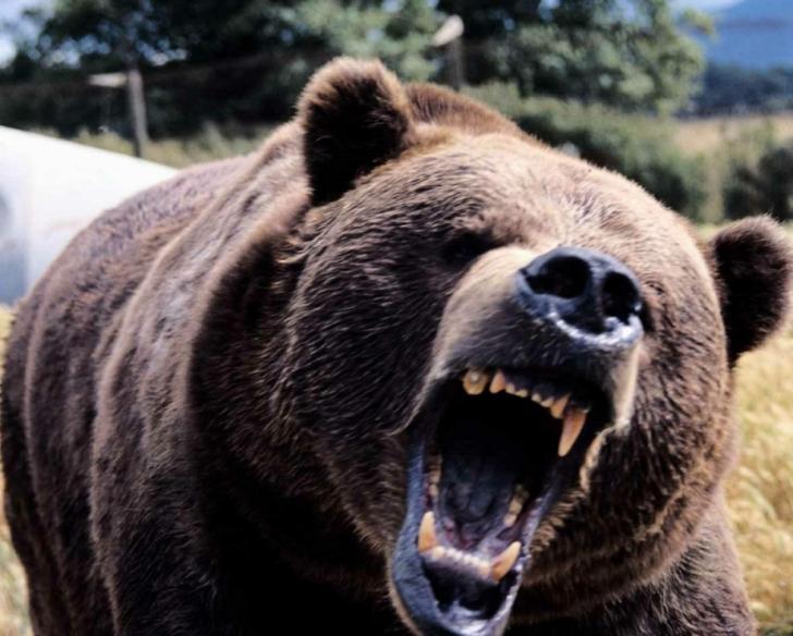 Un bărbat din Harghita, ucis de un urs înfometat (VIDEO)