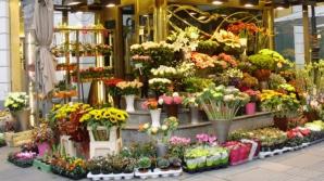 Această plantă este ucigaşă! Se vinde la toate florăriile din România, deşi e foarte toxică