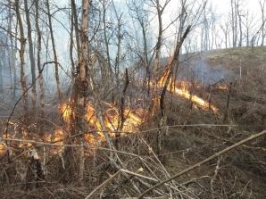 Incendiu de pădure în Sibiu