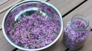 Ce poți trata cu flori de liliac