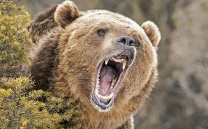 Pădurar atacat de urs. Gestul bărbatului care a înfuriat animalul