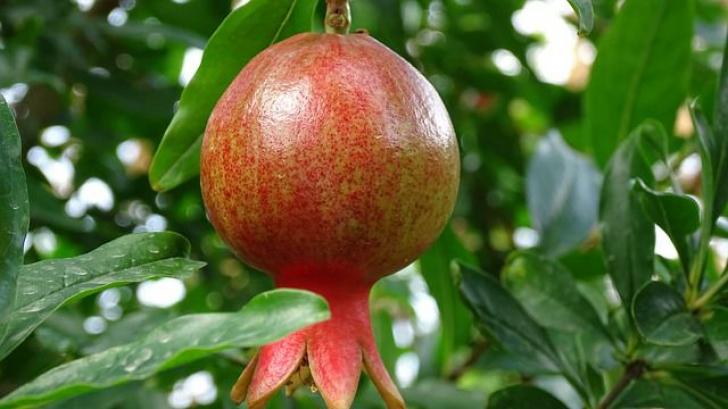 Există un singur fruct care scade colesterolul la fel de rapid ca medicamentele