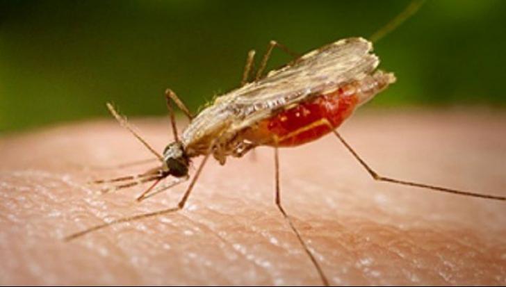 Locul în care te pișcă cel mai mult țânțarii. Tu știi ce trebuie să îți acoperi?
